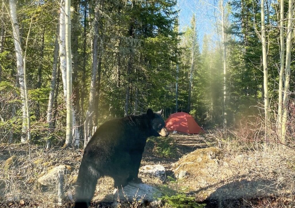 camping-bear-sofzukov