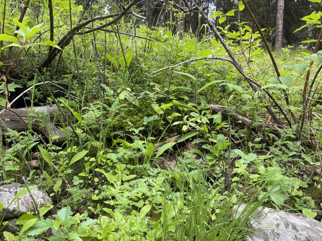 wild plants in nature